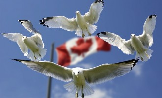 New elections laws could disenfranchise voters in Canada